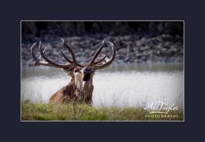 Mel_Taylor_Nature_February_UK_14
