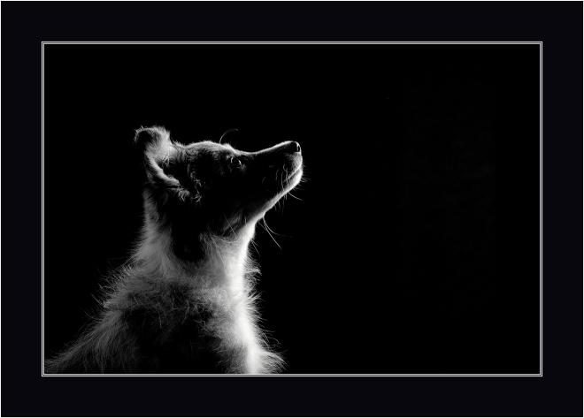 HCMel_Taylor_Pet Portrait_January_UK_15_10165