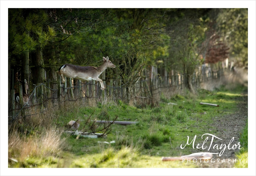 In to the Woods_0092