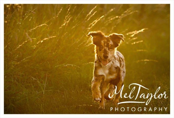 Digital Photographer_0181