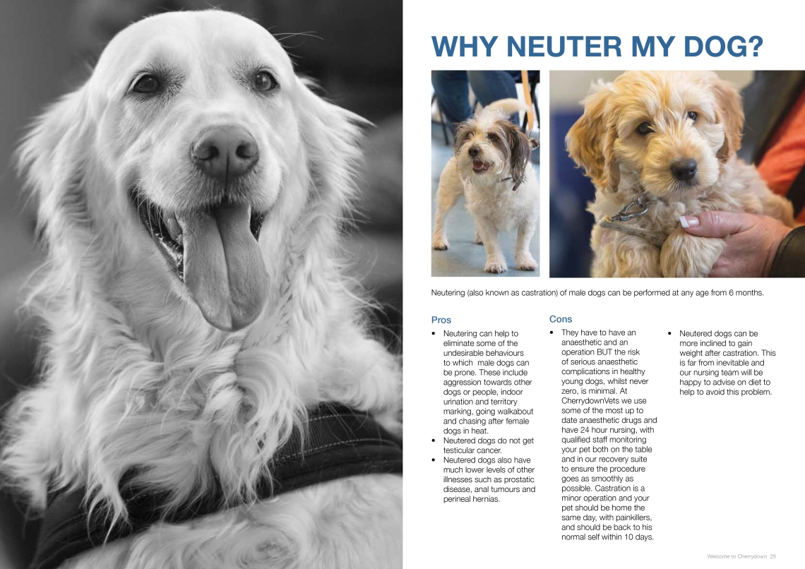 Neuter - Final Version-3