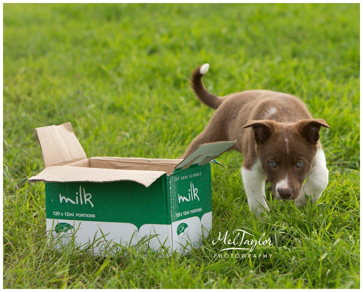 Paignton Dog Show Westpoint