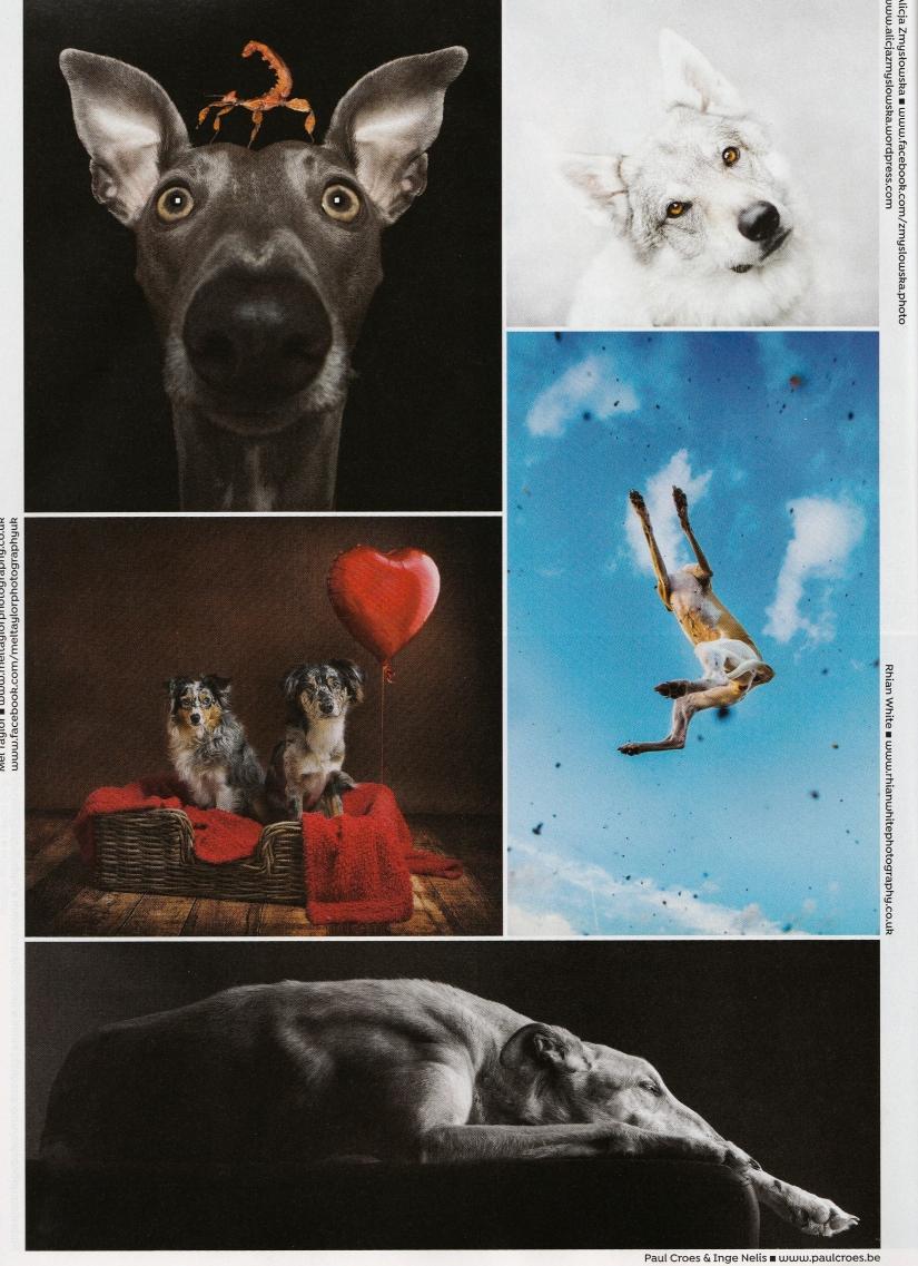 Dogs Today FeburaryIssue